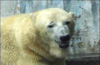 ゆかいなどうぶつたち ~パンダ・クマ・…